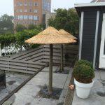 rieten parasol op boomstam, plataan